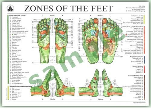 Chart - Zones of the Feet DIN A3